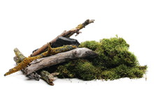 Green Moss With Rotten Branch ...