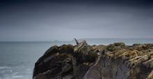 A Cormorant Seabird Standing O...