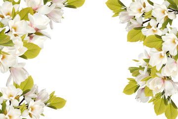 FototapetaBeautiful blooming magnolia flower bouquet isolated on white background.