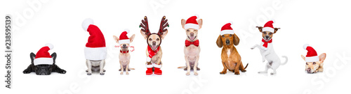 Foto op Aluminium Crazy dog big team row of dogs on christmas holidays