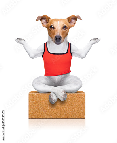 Poster Crazy dog yoga dog