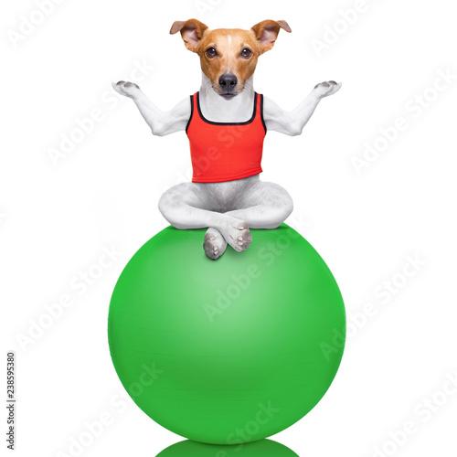 Fotobehang Crazy dog yoga dog