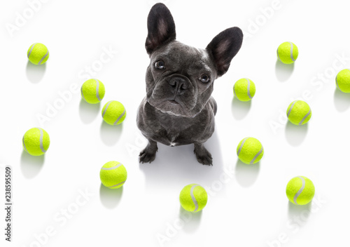 Foto op Aluminium Crazy dog dog play tennis ball