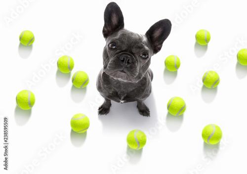 Staande foto Crazy dog dog play tennis ball