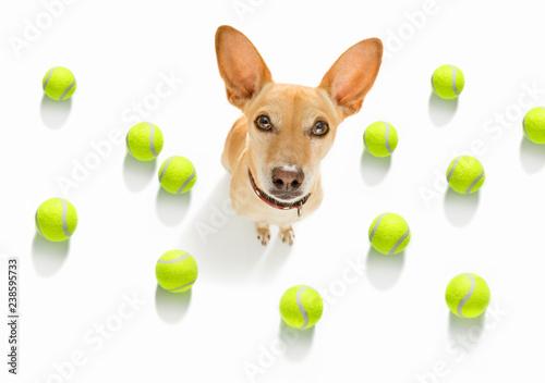 Fotobehang Crazy dog tennis tournament dog