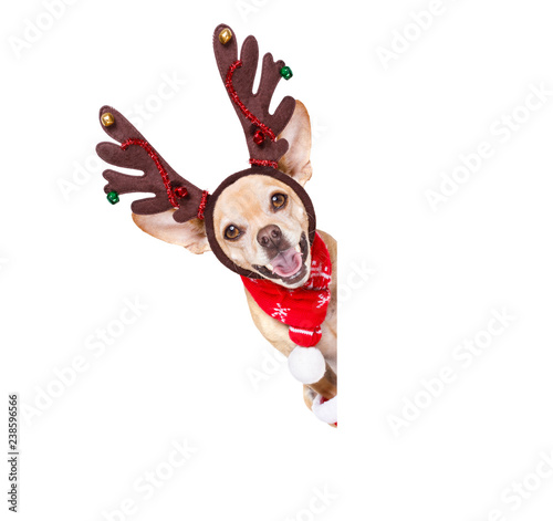 Fotobehang Crazy dog christmas santa claus reindeer dog