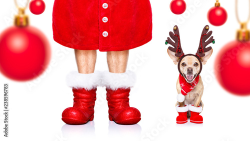 Fotobehang Crazy dog christmas santa claus dog