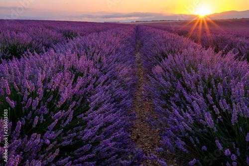 Garden Poster Lavender Champ de lavande en Provence. Lever de soleil.