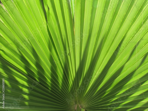 Palmenblatter Buy This Stock Photo And Explore Similar Images At