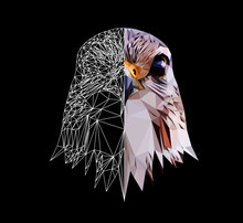 Falcon Head On Black Background, Low Poly Triangular And Wireframe Vector Illustration EPS 10 Isolated. Polygonal Style Trendy Modern Logo Design. Suitable For Printing On A T-shirt.
