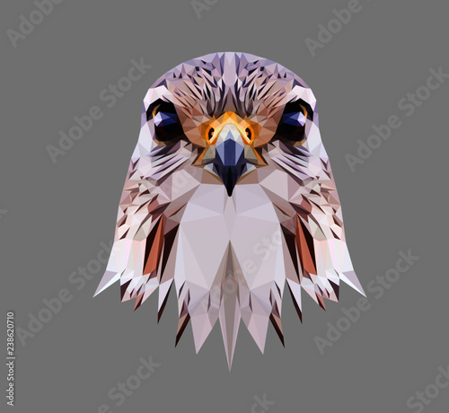 Falcon head on grey background, low poly triangular and wireframe vector illustration EPS 10 isolated Fototapeta