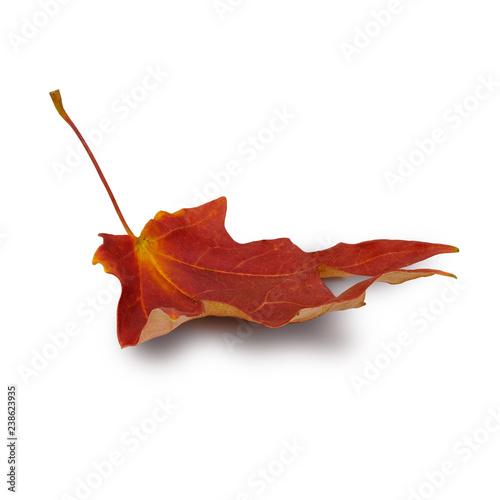 Fotografie, Obraz  Isolated Autumn Leaves on white background