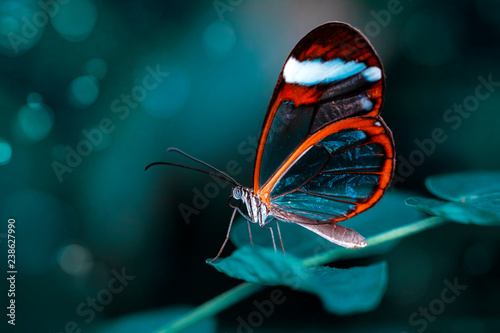 Poster Vlinder Beautiful butterfly sitting on flower in a summer garden