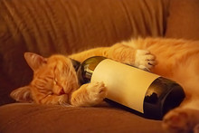 Orange Cat Lying On The Couch In An Embrace With A Bottle Of Wine. Ginger Cat