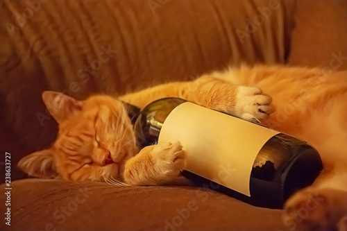 Stampa su Tela  Orange cat lying on the couch in an embrace with a bottle of wine