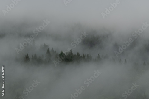 Fényképezés Niebla y Árboles