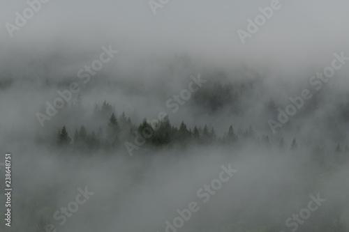 Fototapeta  Niebla y Árboles