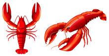 Set Of Red Lobster