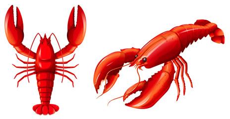 Zestaw czerwony homar