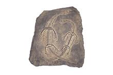 Fossil : Dinosaur Fossil (Keic...