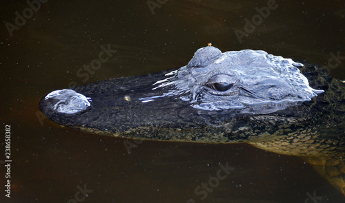 Recess Fitting Crocodile Aliigator