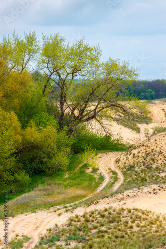 The cloudy landscape with the green forest, sandy desert and rural ground road between them Wallpaper Mural
