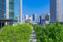 (東京都ー都市風景)豊洲オフィスビル群と並木道2