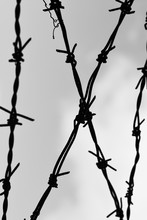 The Barbed Wire With Gray Sky