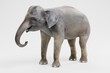 Realistic 3D Render of Asian Elephant - Female