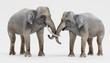 Realistic 3D Render of Asian Elephants