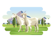 Goats Farm Animal