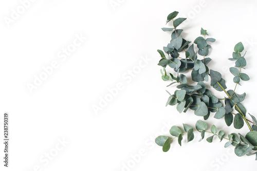 Poster Plant Frame, corner made of green Eucalyptus leaves and branches on white background. Floral composition. Feminine styled stock flat lay image, top view. Copy space.