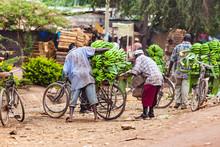 Help To Load Bananas At Street...
