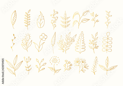 Fototapeta Hand Drawn Floral Branches Golden Leaves And Flowers Set Gold Botanic Borders Vector Isolated Elements Wedding Dividers For Invitation