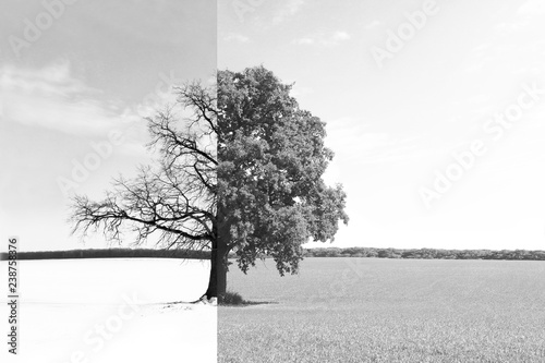 Black and white abstract photo with lonely tree
