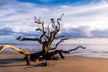 Driftwood Beach In Georgia