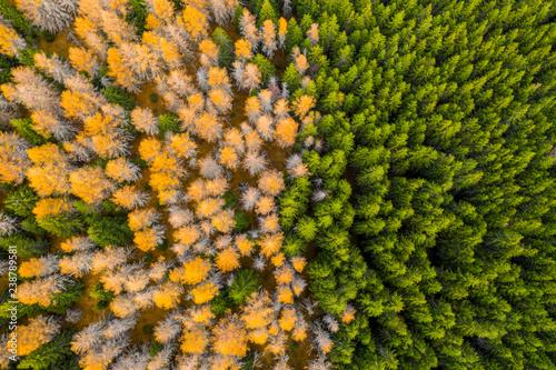 widok-z-lotu-ptaka-jesien-barwiony-las-drone-strzal-z-lotu-ptaka-naturalny-wzor-w-widoku-z-gory-na-dol-z-lotu-ptaka-nad-lasem-zielony