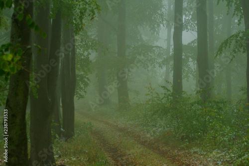 Fototapeten Wald Road through autumn forest. Bieszczady Mountains.