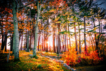 Fototapeta Las Fall Foliage Sunset