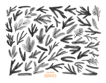 Collection Of Pine Tree And Spruce Branches. Hand Drawn Christmas And Winter Decorative Elements.