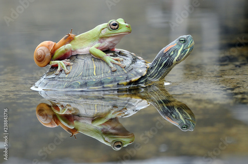 Frog with Turtle and Snail