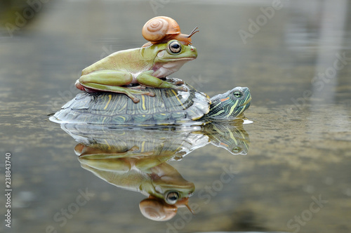 Canvas-taulu Frog with Turtle and Snail