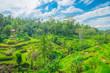 Bali Ubud Rice Terrace 2