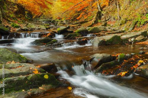 Jesień w pierwotnym lesie. Bieszczady. Prowcza stream. Bieszczadzki Park Narodowy.