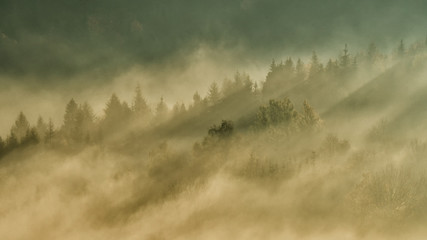 Autumn in the primeval forest. Bieszczady Mountains.