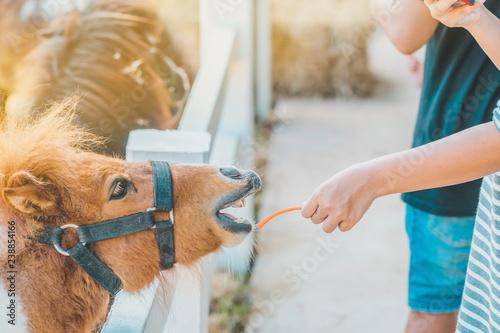 Fotografie, Obraz  Boy feeding horse in his farm through a white wooden fence.
