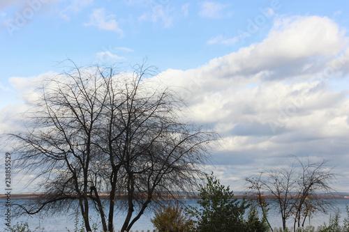 Fotografie, Obraz Tree on the river bank .