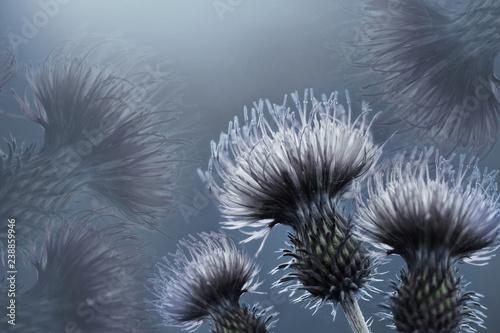Photo Floral  blue background