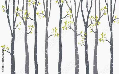 drzewny-brzozy-tlo