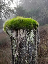 Moss On Fence Post